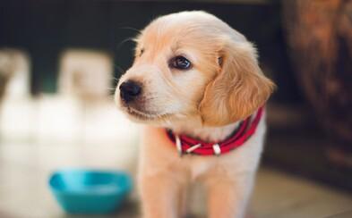 Muža oblízal vlastný pes, nakazil ho a na následkty infekcie zomrel