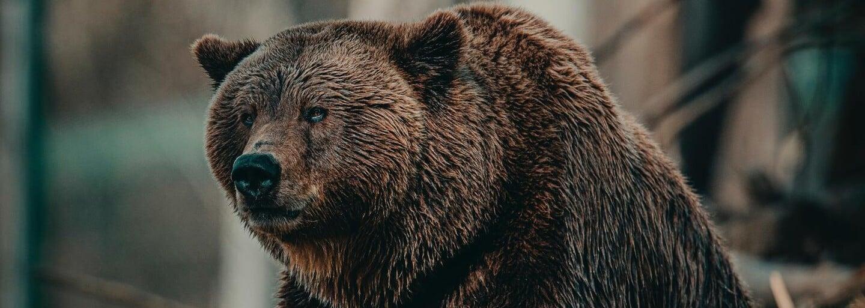 Muže na Sibiři zabil medvěd před očima jeho přátel. Ti pak šli sedm hodin naboso pro pomoc