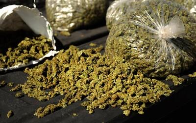 Může zabránit šíření rakoviny a dokáže pomoci při úzkostech. 7 zdravotních benefitů marihuany