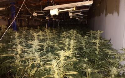 Muži provozovali tak velkou marihuanovou farmu, že měli doručovací dodávky na její přepravu