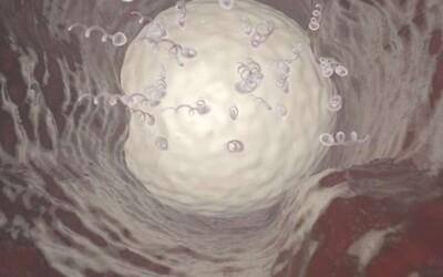 Mužská antikoncepce v podobě revolučního gelu se stoprocentně osvědčila při testech na opicích. Dal by se používat, ale i kdykoliv vysadit