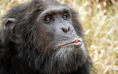 Mužské bradavky, chvost či tretie očné viečko. 10 dôkazov evolúcie v ľudskom tele