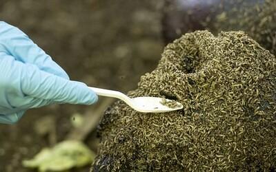 Na farmě lidských těl v Texasu zkoumají vědci rozklad mrtvých na otevřeném prostranství, přihlásit se můžeš i ty