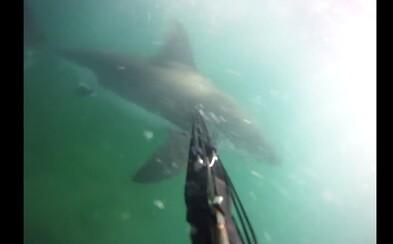 Na GoPro natočil útok zúrivého žraloka. Tyler obišiel so zranenými prstami, ale podarilo sa mu prežiť
