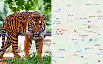Na Hradecku utekli dva tygři a lev. Policie doporučuje, aby se lidé nezdržovali venku