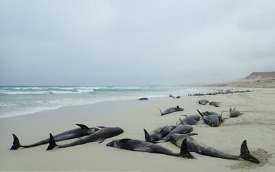 Na Kapverdských ostrovoch vyplavilo takmer 150 uhynutých delfínov