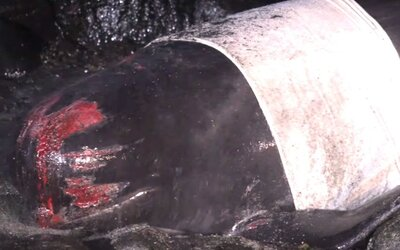 Na pobřeží Islandu byly vyvržené velryby, zhruba 20 z nich uhynulo
