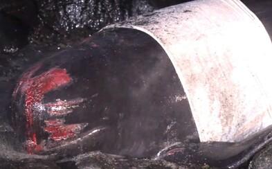 Na pobrežie Islandu boli vyvrhnuté veľryby, zhruba 20 z nich uhynulo