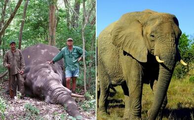 Na profesionálneho lovca spadol slon, ktorého zastrelila jeho skupina. Theunisov lov v Zimbabwe skončil smrťou
