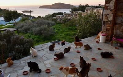 Na řeckém ostrově ti zaplatí za to, aby ses staral o 55 koček. Dostaneš i dům s výhledem na moře