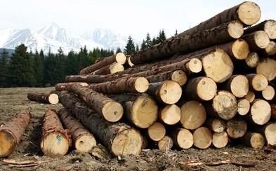 Na Slovensku sa skončil biomasaker. Spaľovanie zdravých stromov bolo v parlamente zakázané
