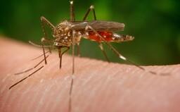 Na Slovensku zaznamenali výskyt ázijského invázneho komára. Môže prenášať nebezpečné choroby vrátane vírusu zika