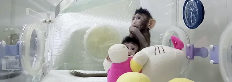 Na svět přišly historicky první klonované opice. Panují však obavy, že budou brzy následovat lidé