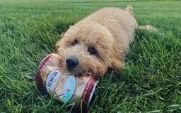 Na trhu je pivo pro psy s názvem Dog Brew. Jedna plechovka stojí přes 50 korun