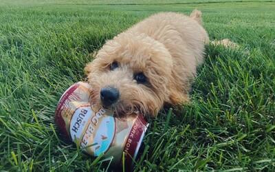 Na trh pribudlo pivo pre psov s názvom Dog Brew. Jedna plechovka stojí vyše 2 €