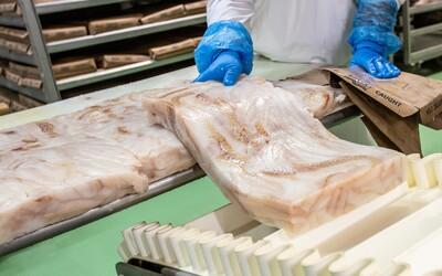 Na výrobu tresky použijú v Žiline denne až 8 a pol tony rýb. Takto miešajú vlastnú majonézu s ďalšími čerstvými surovinami