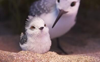Nádherná animace a upřímný příběh v krátkém filmu Piper od Pixaru chytne za srdce každého