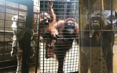 Najdepresívnejšiu zoologickú záhradu nájdeš v nákupnom centre v Bangkoku. Zvieratá tam roky žijú v klietkach bez šance na záchranu