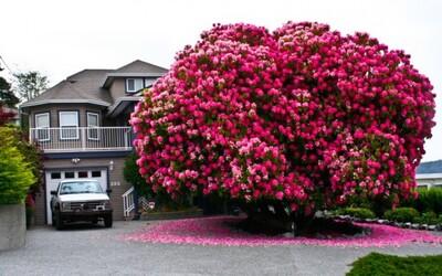 Najkrajšie stromy, ktoré vďaka svojmu zjavu vyzerajú ako z inej planéty