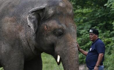 Nejosamělejší slon na světě může po 35 letech v ZOO konečně zažít svobodu a divočinu
