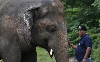 Najosamelejší slon na svete môže po 35 rokoch v ZOO konečne zažiť slobodu a divočinu