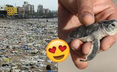 Vyčistili nejšpinavější pláž světa, vrátily se i rozkošné želvy. V Indii odvezli 50 000 tun odpadu