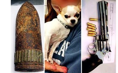 Najzvláštnejšie predmety, ktoré sa ľudia snažili prepašovať do lietadla: Granáty, nože, zbrane či pes!