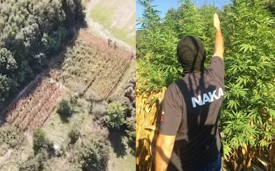 NAKA na juhu Slovenska zničila marihuanové pole. U páchateľov našli tiež 100 gramov pervitínu za 5 500 eur