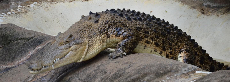 Návštěvníci zoo házeli do krokodýla kameny, aby zjistili, zda je opravdový. Začal krvácet a museli ho ošetřit