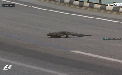 Nečakaná návšteva na tréningu F1. Na trati v Singapure sa medzi formulami pokojne prechádzala jašterica