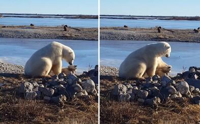 Nečekaná romantická chvilka. Polární medvěd psovi neublížil, ale začal ho hladit a ochotně spolupracovat