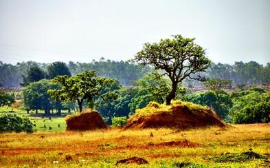 Neďaleko Amazonského pralesa je územie, ktoré trpí viac ako prales.  Je domovom až 5 % živočíchov celej planéty