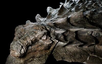 Nejlépe zachovaná fosílie dinosaura ukazuje tvora starého miliony let v úplných detailech