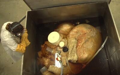 Největší srdce na světě. Je dlouhé 1,5 metru, pumpuje stovky litrů krve a patří plejtváku obrovskému
