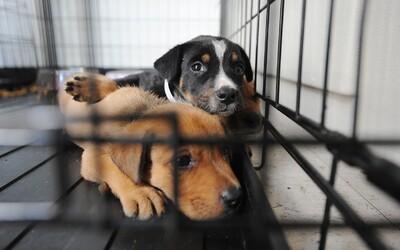 Německé útulky zakázaly adopce před Vánocemi. Psi mají své potřeby i city, vzkazují lidem
