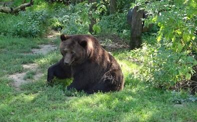Neobetujte svojich pomalších kamarátov, keď stretnete medveďa, prosí turistov správa amerických národných parkov