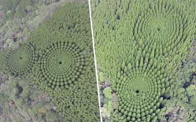 Neobvyklý japonský les potěší srdce každého perfekcionisty. Vznikl díky experimentu ze 70. let