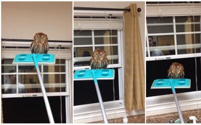 Neočakávaná sova v dome a prekvapivé stretnutie dvoch mačiek