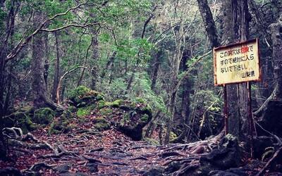 Neprostupný les Aokigahara: děsivé místo, které každoročně láká stovky mladých Japonců k sebevraždě