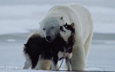 Netradičné zvieracie priateľstvá, ktoré vás milo prekvapia