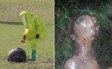 Netvor na záhrade a neznáme padajúce telesá v Španielsku a Turecku. Čo sa to posledné dni deje?
