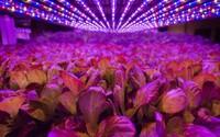 Nevyužíva pôdu ani slnko, no má vypestovať takmer 1000 ton zeleniny. Farma AeroFarms sa nachádza v interiéri