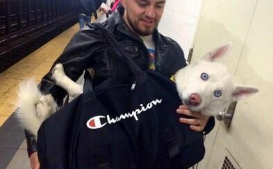 Newyorské metro zakázalo přepravu psů, jestliže se nevejdou do tašky. Obyvatelé osobitě zareagovali a svojí kreativitou baví internet