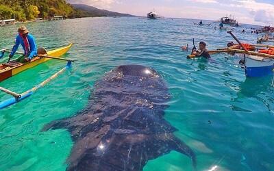 Nezapomenutelné dobrodružství se žraloky na krásných Filipínách nemá jen světlé stránky