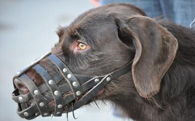 Neznámá nemoc zabíjí psy. V Norsku zemřelo již 26 zvířat se stejnými symptomy
