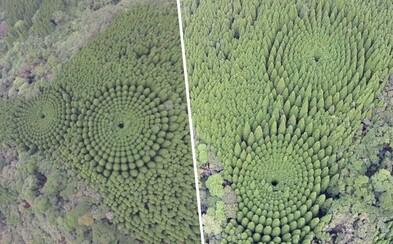 Nezvyčajný japonský les poteší srdce každého perfekcionistu. Vznikol vďaka experimentu spred 50 rokov