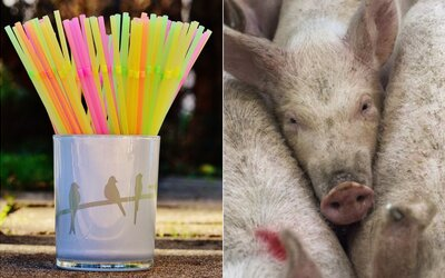 Ničí nás viac konzumácia mäsa alebo plastové slamky?