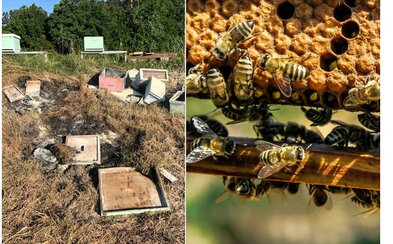 Niekto naschvál podpálil úle a zabil tak 500-tisíc včiel. Nikto nechápe, kto by toho mohol byť schopný