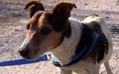 Niekto psíkov zaviazal do igelitového vreca a nechal ich umierať. Preživší zo zúfalstva pojedal mŕtve telo svojho kamaráta