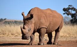 Nosorožec, ktorý visí hore nohami vo vzduchu, dostal parodickú Nobelovu cenu. Uhádneš prečo?